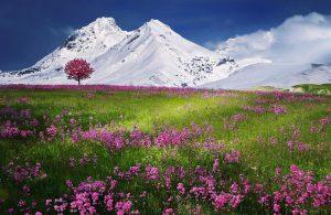 Paisaje con arbol y montañas nevadas