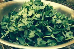 Ensalada hojas fenogreco