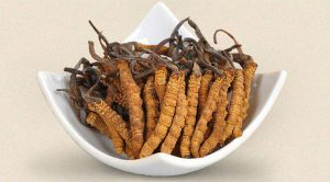 Cordyceps-sinensis-propiedades
